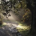 Camiño de Santiago-O Amenal-O Pino