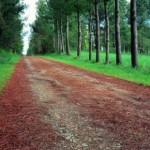 CIN_Oroso_Camino_en_Sigueiro_AdolfoEnriquez